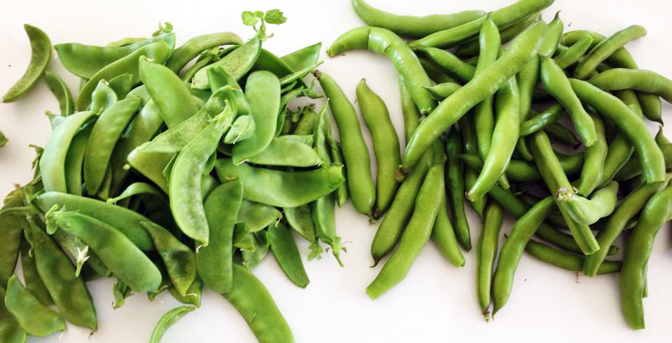Crop of broad beans and snow peas